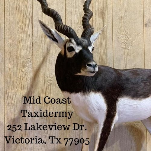 Mid Coast Taxidermy 10083 US Hwy 59 N Goliad, TX 77963 (1)